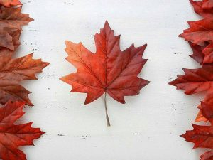 Canada Day 2018 Hours